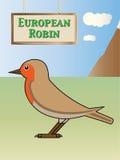 European Robin Stock Images