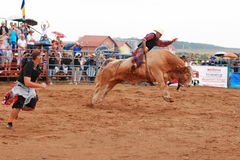 European Rodeo Championship. Bull rodeo day 1 European Rodeo Championship 2013 Royalty Free Stock Image