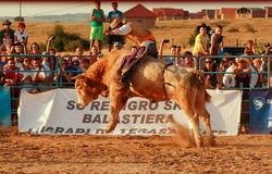 European Rodeo Championship. Bull rodeo finals European Rodeo Championship 2013 Stock Image
