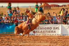 European Rodeo Championship Stock Images