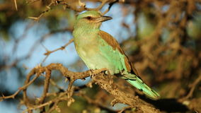 European roller stock video footage