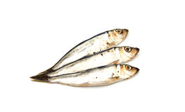 European salted anchovies isolated on Stock Photography