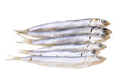 European salted anchovies isolated Stock Photos
