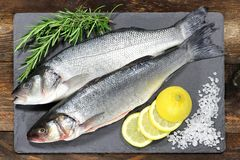 European seabass Royalty Free Stock Photography