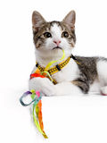 European shorthair cat laying down and playing with colorfull strings Royalty Free Stock Photo