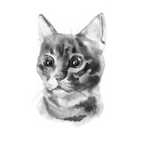 European shorthair cat red tabby, kitten lies on white background, isolated, hand draw watercolor painting. vector illustration