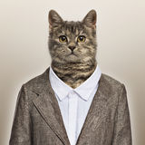 European Shorthair wearing a suit Royalty Free Stock Photography