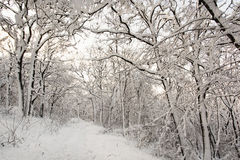 European snowy forest, seasonal natural white scenery. European snowy forest. Seasonal natural white scenery. Tourism theme stock photo