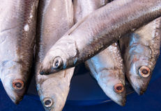 European sprats. Five sprats on the dark blue plate Stock Photo