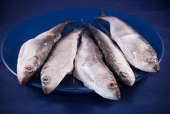 European sprats. Five sprats on the dark blue plate Stock Images