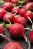 European spring fresh radish. Black background royalty free stock images
