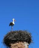 European Stork standing on nest Stock Photo