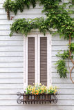 European style window and flower Royalty Free Stock Photos