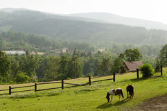 European summer farmland scene with two horses Royalty Free Stock Photography