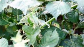 European tree frog stock footage