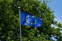 European Union flag over green tree Stock Image