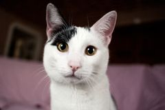 An european white cat in the foreground stock photos