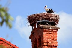 European white stork Ciconia ciconia stands on his big nest. The stork nest is made of a lot of branches and lies on a nice old royalty free stock photos