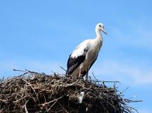 European white stork on nest Stock Photos