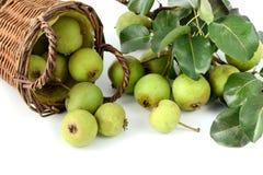 European wild pear on white background. Royalty Free Stock Image