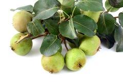 European wild pear on white background. Stock Photos