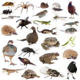 European wildlife Stock Photo