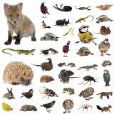European wildlife in studio stock photography