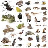 European wildlife in studio royalty free stock photography