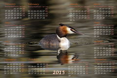 European 2015 year calendar with crested grebe. Duck on water Stock Photo