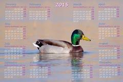 European 2015 year calendar with male mallard duck. On water stock illustration