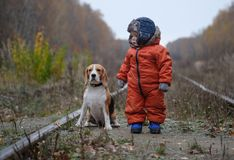 European boy and the Beagle in autumn forest Royalty Free Stock Images