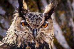 Europees-Aziatisch Eagle Owl op boomtak Royalty-vrije Stock Foto