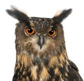 Europees-Aziatische adelaar-Uil, Bubo bubo, 15 jaar oud stock foto