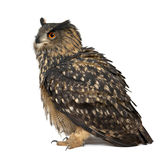 Europees-Aziatische adelaar-Uil, Bubo bubo, 15 jaar oud Royalty-vrije Stock Fotografie