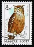 Europees-Aziatische Eagle-uil Bubo-bubo, reekscirca 1984 royalty-vrije stock foto