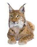 Europees-Aziatische Lynx, 5 jaar oud, het liggen Royalty-vrije Stock Foto