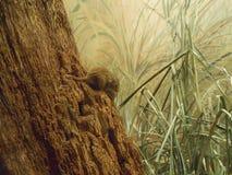 Europees-Aziatische oogstmuis Stock Foto