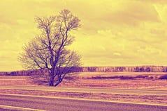 Europees landschap in Maart Royalty-vrije Stock Afbeeldingen