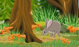 Europeisk hare i höstskogstammarna av lövfällande träd och granen, mossor och gräs, skogchampinjonkantareller, sten stock illustrationer