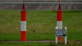 Europeisk hare nära landningsbana arkivfilmer