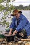 Europeisk kopp av guldgrävarna i floden. Arkivfoto