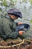 Europeisk kopp av guldgrävarna i floden. Royaltyfria Foton