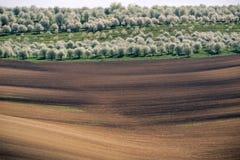 Europeisk lantlig tapet - panorama av den Moravian rullningen sätter in l Arkivfoton