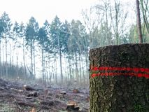 Europeisk skog med det talrika snittet ner träd, en stam i förgrund arkivbilder
