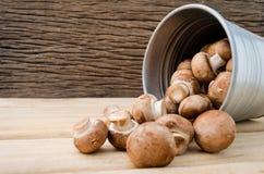 Europeisk soppa för matbegreppschampinjon med champignonaktivering med brun bakgrund Champignonchampinjonen eller knappchampinjon Royaltyfria Foton