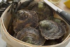 europeiska plana nya ostroner för korg Arkivbild