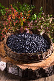 Europeiskt blåbär royaltyfria bilder