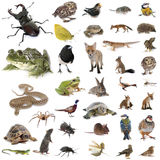 Europeiskt djurliv i studio royaltyfri fotografi