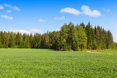Europeiskt landskap för lantlig sommar arkivfoto