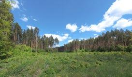 Europeiskt landskap för sommar med skogen arkivfoton